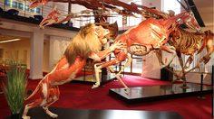 กล้ามั้ย! 8 พิพิธภัณฑ์แปลก หลอนปนเสียวจากทั่วโลก