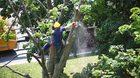 รู้กันยัง? อัตราค่าบริการ ตัดต้นไม้ พร้อม เบอร์โทร. ติดต่อของแต่ละเขต ใน กทม.