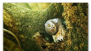 12 Amazing Owl Images Created by Sasi Smit