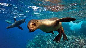 หมู่เกาะกาลาปากอส  ดินแดนของสัตว์หายาก หนึ่งเดียวในโลก!