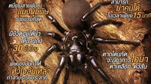 แฉข้อมูลสุดอันตราย!! พิษร้ายจาก แมงมุมใยกรวย โหดขนาดไหน ในหนัง Guardians of the Tomb