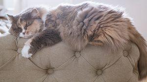 วิธีกำจัดขนแมว ที่ติดตาม เฟอร์นิเจอร์ และ  ของใช้ในบ้าน