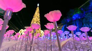 ดอกกุหลาบ LED กว่า 10,000 ดอก อวดสีสัน 7 เฉดสี หน้าห้างเดอะมอลล์ โคราช