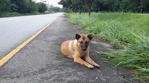 ปิดตำนาน 'เจ้าหลง' สุนัขรอเจ้านายผู้ซื่อสัตย์ ถูกรถชนตายแล้ว