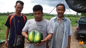 ชาวบ้านเมืองคอนฮือฮา! พบแตงโมตอปิโดแฝด คอหวยไม่พลาดแห่แทงเลขเด็ด