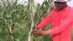 อดีตคนงานสู้ชีวิต! หันปลูกพืชหมุนเวียนหลังฤดูกาลทำนา สร้างรายได้ทั้งปี