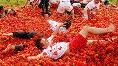 เทศกาลปามะเขือเทศ (La Tomatina) เทศกาลแปลก