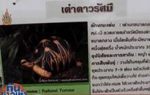 ตร.ยังไม่พบมือขโมยเต่ามาดากัสการ์