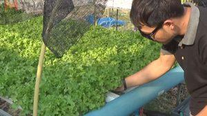 หนุ่มวัยรุ่นใช้เวลาว่าง ปลูกผักไฮโดรโปรนิคสร้างรายได้งาม