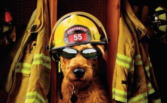 Firehouse Dog ยอดคุณตูบ ฮีโร่นักดับเพลิง