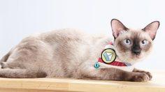DIY ปลอกคอแมว สไตล์มินิมอล