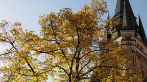 ใบไม้เปลี่ยนสี ที่ เยอรมนี
