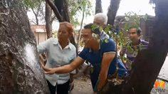 แห่ขอหวย!! 'ต้นมะค่าแฝด' โบราณอายุกว่า 100 ปี ที่ศาลเจ้าพ่อบ้าน