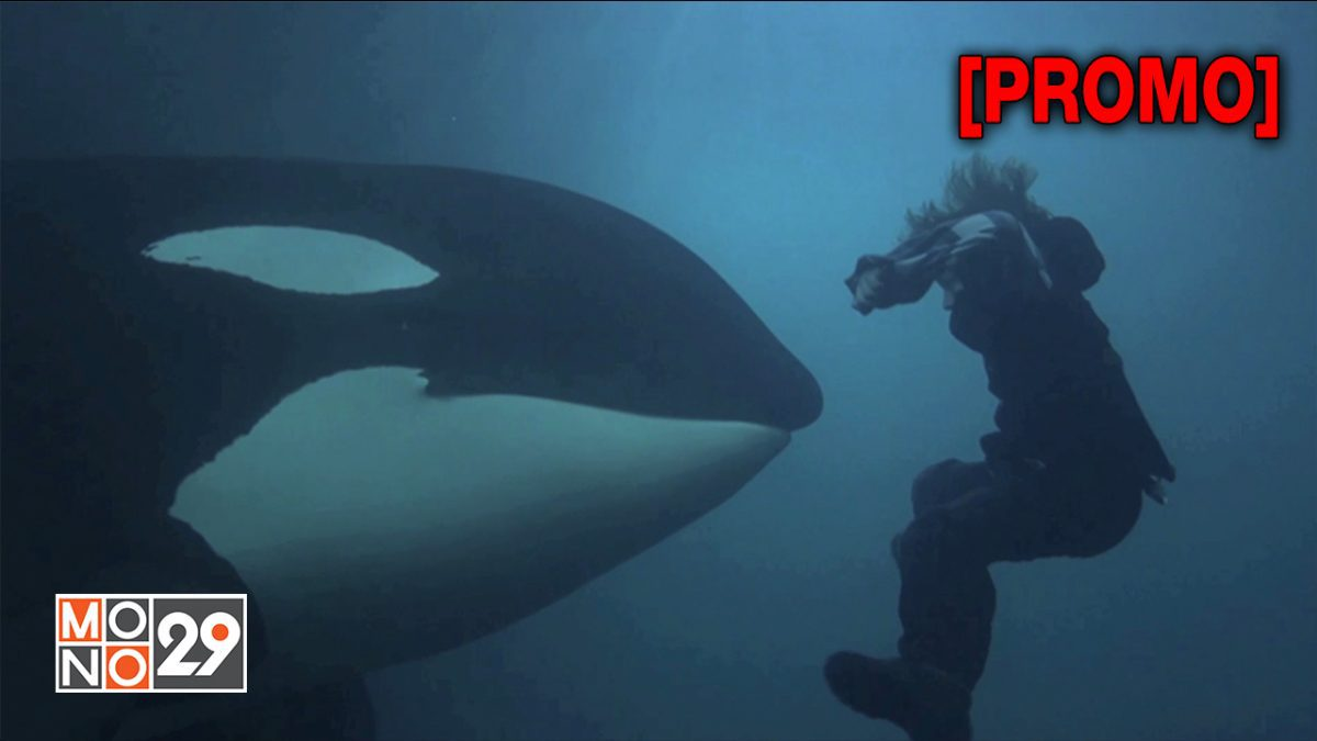 Free Willy 3 :The Rescue ฟรีวิลลี่  เพื่อเพื่อนก้วยหัวใจอันยิ่งใหญ่ [PROMO]