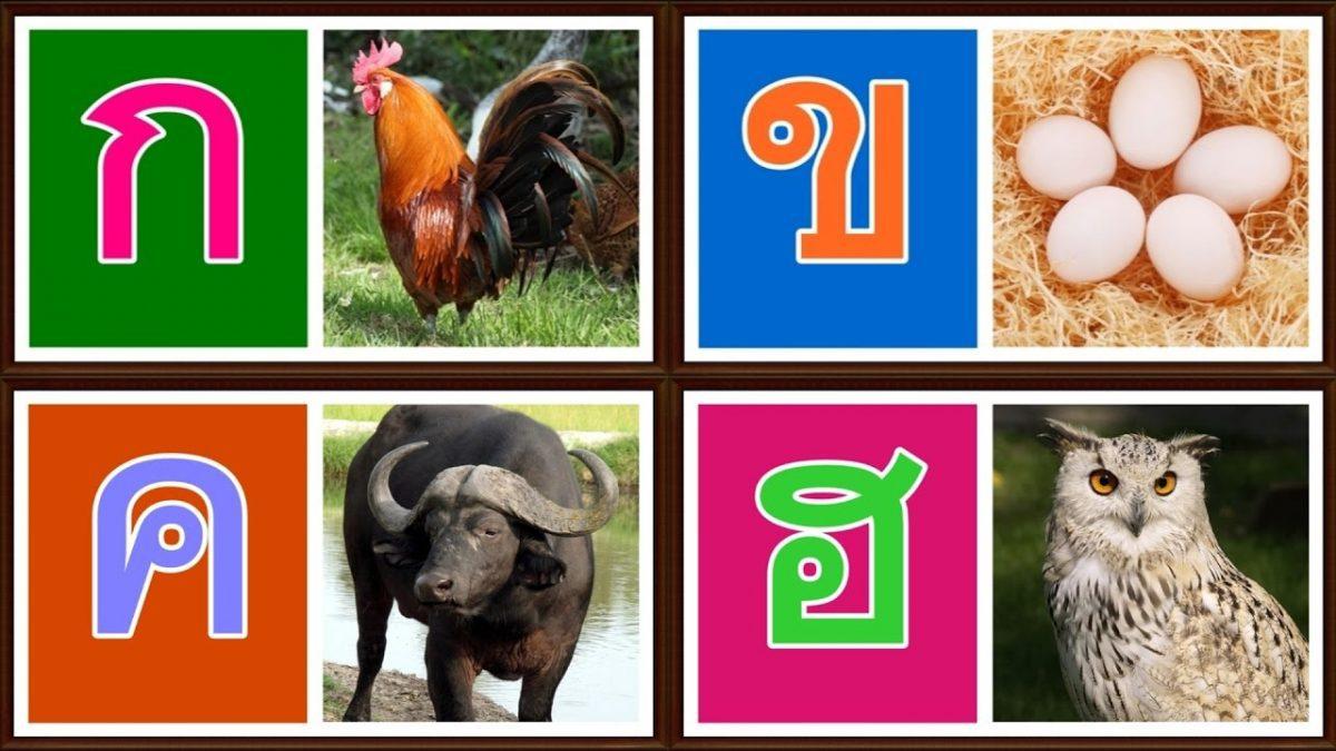 เพลง ก เอ๋ย ก ไก่ ภาพจริง เสียงเพราะ เด็กจำง่าย | พยัญชนะไทย | Learn Thai Alphabet