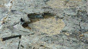 พบรอยเท้า 'ไดโนเสาร์' หายากยุคก่อนประวัติศาสตร์ในสก็อตแลนด์