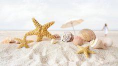 ทะเล ก้อนหิน เปลือกหอย ความงามจากธรรมชาติ