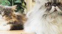 ฟินเว่อร์! คาเฟ่แมวของ 'เพชร นาระ'  Purr cat cafe club สุขุมวิท 53