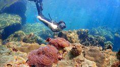 'อ่าวแสมสาร' สัตหีบ แหวกว่ายใต้ท้องทะเลไทย สวรรค์ใกล้ๆ ไม่เกินเอื้อม
