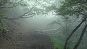 สยอง! ป่าอาถรรพ์ อาโอกิกาฮาระ