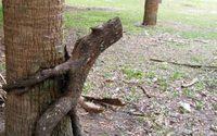 ธรรมชาติก็ทำอนาจารได้นะ หลักฐาน15 รูปภาพ ต้นไม้ลามก