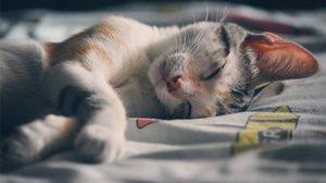 5 เคล็ดลับ ที่จะทำให้คุณหลับเต็มอิ่ม - เพียงแค่จัดตารางเวลาให้เหมาะสม