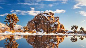 ยลโฉม 20 ภาพถ่ายต้นไม้ ที่งดงามที่สุดทั่วโลก