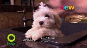"""เรื่องราวของเจ้าสุนัขแสนซน ในสารคดี """"น่ารักเกินไปแล้ว"""" นิวทีวี"""