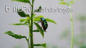 แมลงก็มีประโยชน์! 6 แมลง พันธุ์ดี ช่วยกำจัดศัตรูพืช หน้าตาเป็นแบบนี้