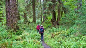 เรื่องน่ารู้การเดินป่า ในหน้าฝน