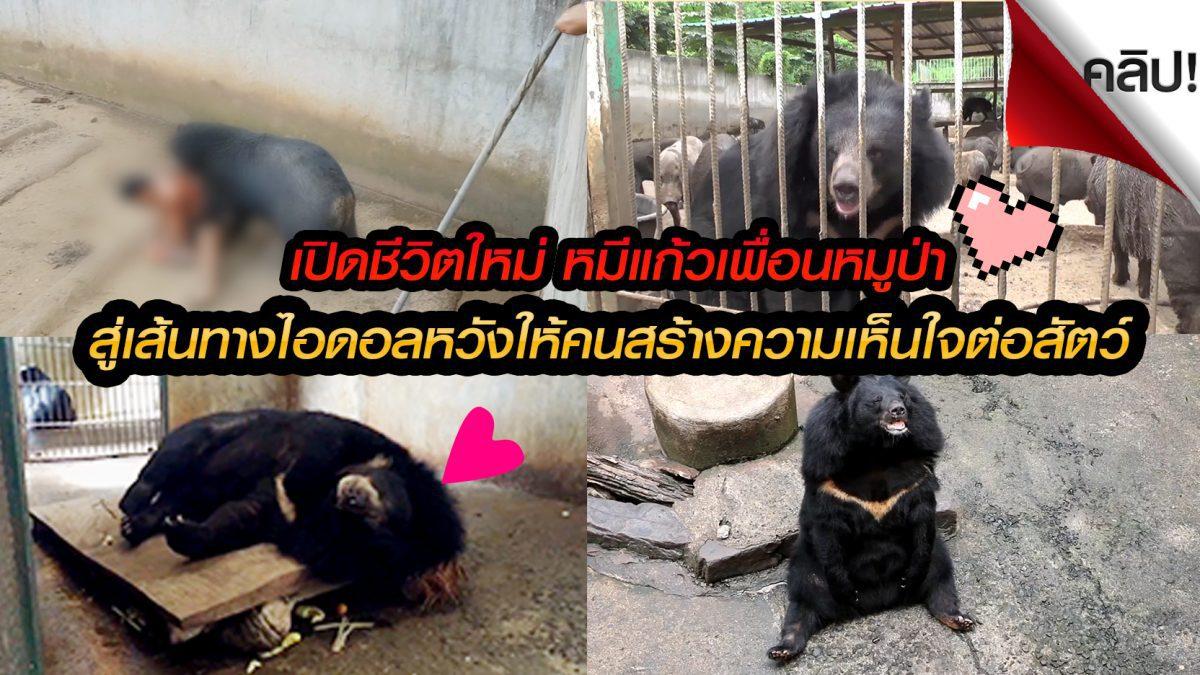 (คลิป) เปิดใจดูชีวิตใหม่เจ้าแก้วหมีควายเพื่อนหมูป่า ที่เคยเกือบกัดคนตายจนเป็นข่าวดัง!