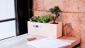 เติมความสดชื่นให้โต๊ะทำงานด้วย Table Garden