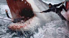 ฉลามไซส์ยักษ์ เมกาโลดอน รอเคี้ยว เจสัน สเตแธม ใต้ทะเล ในตัวอย่างแรก The Meg