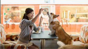 8 Pet-Friendly Restaurants and Cafés in Bangkok
