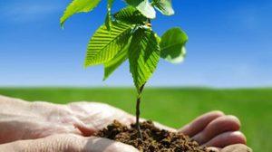 วันรักต้นไม้ประจำปีของชาติ