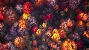 ภาพถ่ายใบไม้เปลี่ยนสี ในมุมสูงสุดอลังการ ส่งท้ายฤดูใบไม้ร่วง