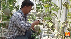หนุ่มวิศวะใจรักอาชีพเกษตร หันมาทำสวนผักทุกอย่างที่กิน