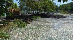 ชาวบ้านโวย! เทศบาลเมืองคอนถมดินปรับภูมิทัศน์ ทำปลาตายเป็นตัน