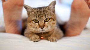 จบปัญหาคนรักสัตว์! อยาก เลี้ยงสัตว์ในคอนโด ควรทำอย่างไรดี ?