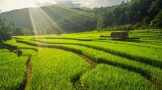 ชมวิวขั้นเทพ กับ 10 ที่เที่ยวนาขั้นบันได ในเมืองไทย