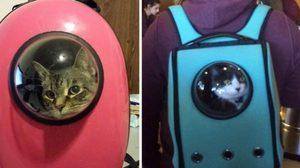 แบบนี้ก็มีด้วย กระเป๋าเป้พกแมวไปได้ทุกที