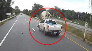 รถชนวัว, เพจสายตรงกฎหมาย
