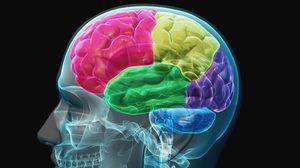 อาหารสำหรับ สมอง กินไว้ห่างไกล โรคความจำเสื่อม !