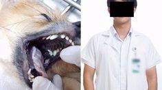 นักศึกษาแพทย์ วางยาฆ่าหมาหวังเงินประกัน เข้าพบตำรวจแล้ว