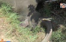 ไฟฟ้าช็อตช้างล้มตัวที่ 3 ในรอบ 6 เดือน จ.ฉะเชิงเทรา