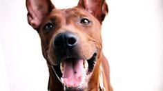 """""""มะขาม"""" สุนัขแสนรู้พระเอก จาก 'มะหมา 4 ขาครับ' สิ้นลมแล้ว"""