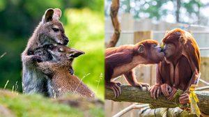 Animals in Love ภาพน่ารัก ของเหล่าสัตว์โลกเวลารักกัน