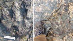 ย่อยยับ ! คนร้ายทุบทำลายรอยเท้าไดโนเสาร์อายุ 115 ล้านปี