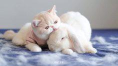 น่ารักมุ้งมิ้ง แมวน้อย MUMARUกับ เจ้ากระต่ายซาลาเปา