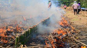 วัดดังอ่างทอง สืบสานประเพณีการเผาข้าวหลาม 10,000 กระบอก เป็นพุทธบูชา